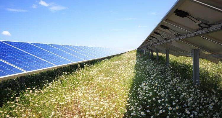 Solar Parks Are Benefitting Biodiversity
